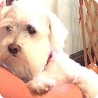 Adopt A Pet :: KIRBY(diabetic) - Upper Sandusky, OH