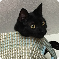 Adopt A Pet :: Hunter - Burbank, CA