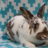 Adopt A Pet :: Tyler - Erie, PA