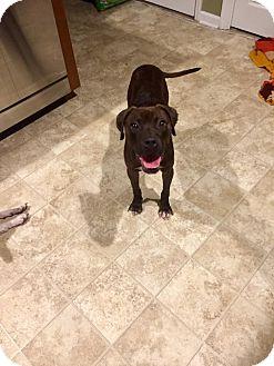 Boxer Mix Dog for adoption in Jacksonville, North Carolina - Lizzy