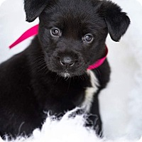 Adopt A Pet :: Raven 💜 ADOPTED! - Saratoga Springs, NY