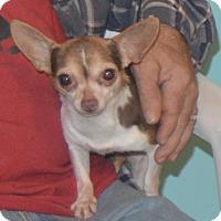 Adopt A Pet :: Chica - Prole, IA