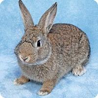 Adopt A Pet :: Bouncer - Encinitas, CA