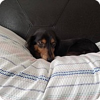 Adopt A Pet :: Gemma - Woonsocket, RI