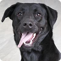 Adopt A Pet :: Andi - Chicago, IL