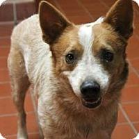 Adopt A Pet :: Benny - Daytona Beach, FL