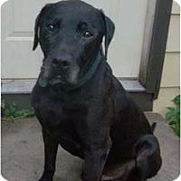 Adopt A Pet :: Ben - St. Paul, MN