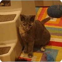 Adopt A Pet :: Hanna - Muncie, IN