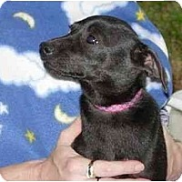 Adopt A Pet :: BeBe - Kingwood, TX