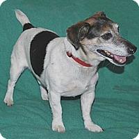 Adopt A Pet :: Cullie - San Francisco, CA