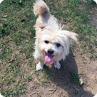 Adopt A Pet :: Binky (2) - Fort Valley, GA