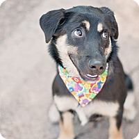 Adopt A Pet :: Carly - Kingwood, TX