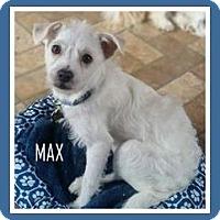 Adopt A Pet :: Bricktown NJ - Max - New Jersey, NJ