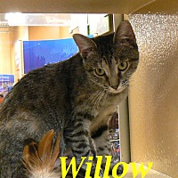 Adopt A Pet :: Willow - ADOPTED! - League City, TX