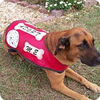Adopt A Pet :: Emma - Marianna, FL