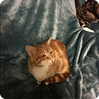 Adopt A Pet :: Eddie - Buchanan, TN