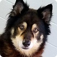 Adopt A Pet :: Tommy - Paducah, KY