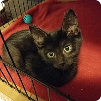 Adopt A Pet :: Benny - Jeannette, PA