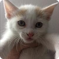 Adopt A Pet :: Mae - St. Louis, MO