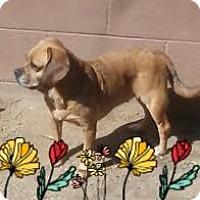 Adopt A Pet :: Gwen - Las Vegas, NV
