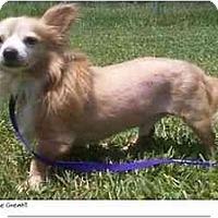 Adopt A Pet :: Don Juan - Chesapeake, VA