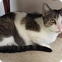 Adopt A Pet :: Riley - Trevose, PA