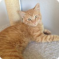 Adopt A Pet :: Yoda - San Ramon, CA