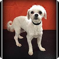 Adopt A Pet :: Liam - Indian Trail, NC