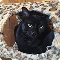 Adopt A Pet :: Chase - Davison, MI
