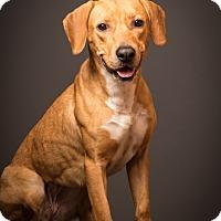 Adopt A Pet :: Dayton - likes to swim - Norwalk, CT