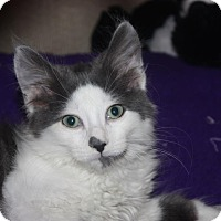 Adopt A Pet :: Penn (LE) - Little Falls, NJ