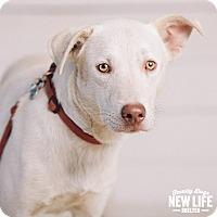 Adopt A Pet :: Clarence - Portland, OR