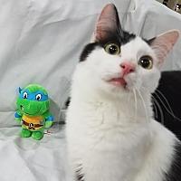 Adopt A Pet :: Leonardo - Edmond, OK