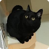 Adopt A Pet :: Salem - Phoenix, AZ