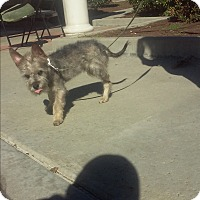 Adopt A Pet :: Fynn - El Cajon, CA