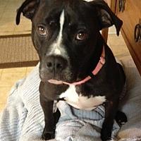 Adopt A Pet :: Kenny - Savannah, GA