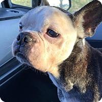 Adopt A Pet :: Beanie - Codorus, PA