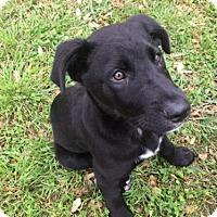Adopt A Pet :: CoalW - Olympia, WA