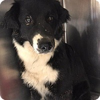 Adopt A Pet :: Happy - Fayetteville, AR