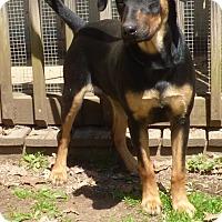 Adopt A Pet :: Gertie - Bedminster, NJ