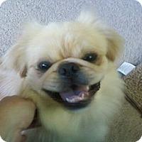 Adopt A Pet :: Cashew---(Portland, ME) - Vansant, VA