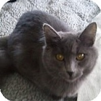 Adopt A Pet :: Asland - Anchorage, AK