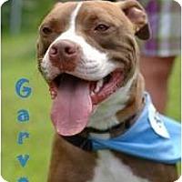 Adopt A Pet :: Garvey - Dallas, PA