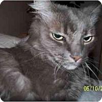 Adopt A Pet :: Miraslav - Beverly Hills, CA