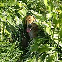 Adopt A Pet :: Caramel - Columbia, KY