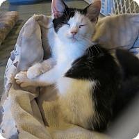 Adopt A Pet :: Koolaid - Geneseo, IL