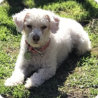 Adopt A Pet :: Pebbles - Santa Monica, CA