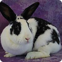Adopt A Pet :: Checkers - Wilmington, NC