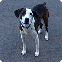Adopt A Pet :: Lucky in CT - Manchester, CT