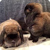 Adopt A Pet :: Charlie & Cocoa - Grand Rapids, MI